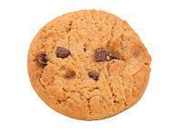 Cookie Biscuit - Jul 2014.