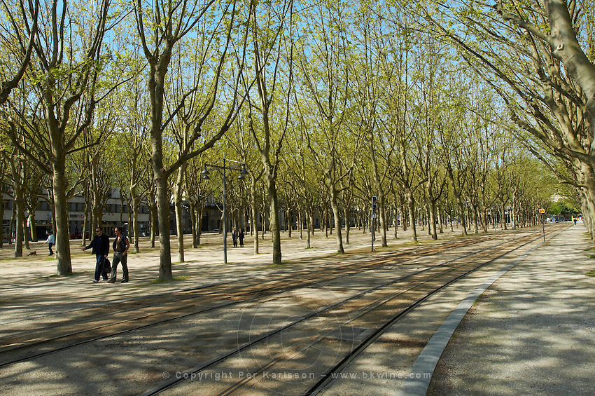 esplanade des quinconces plane trees tram tracks bordeaux france