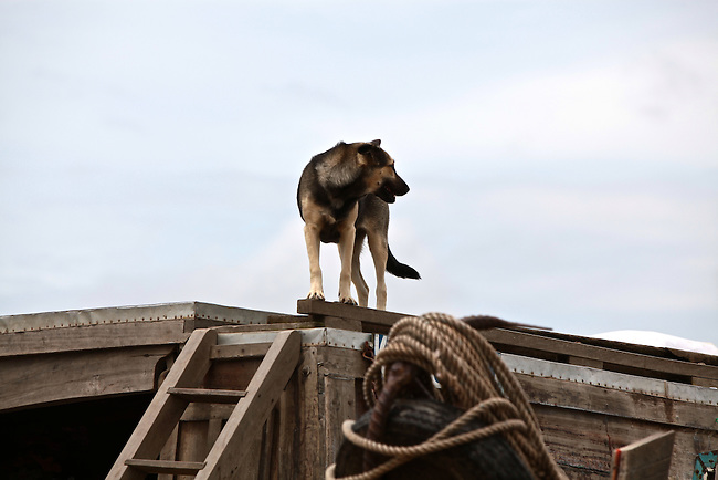 A dog is perched atop a boat on the Hau River in the Mekong Delta, south of Can Tho, Vietnam. Sept. 30, 2011.