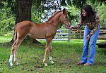 May 28, 2003 - Berit McClure takes a Vocation Vacation to learn horse training at the Four Mountains Ranch northwest of Portland. She is able to coax a 6-week old to come to her for a short visit.