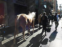 "A horse is walked around the Union Square neighborhood of New York as part of a promotion for the film ""Unbridled"", seen on Saturday, November 19, 2016. ""Unbridled"" is about a faith-based healing ranch, Corral, in North Carolina, for troubled teen girls. (© Richard B. Levine)"