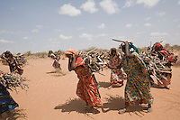 Kenya - Dadaab - Somali refugees carrying dead wood back home, it will be used to build a fence around their tents and to cook.