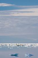 Floating icebergs in the Beaufort Sea, off the coast of Barter Island, Kaktovik, Alaska.