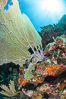 Sea fan scenic<br />