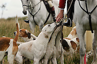 Exmoor, England, 11/09/2003..The Devon and Somerset Staghounds hunting on Exmoor a few days before the bill to ban hunting with dogs was passed in Parliament. Exmoor is the only place in England where stag hunting still takes place.