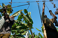 Young Colombian workers preparing the aircable for banana transport on the banana plantation in Aracataca, Colombia, 14 March 2006. Eighty percent of the exported bananas in the world are grown in Latin America. Local farms have no other alternative than to sell for a price offered by the multinational company. When working conditions and ecology is in question, the corporations do not have any responsibility as they do not own plantations. Local governments in the attempt of organizing banana export provide low duty taxes on export, they try to eliminate social and enviromental politics to attract the big companies to their countries.