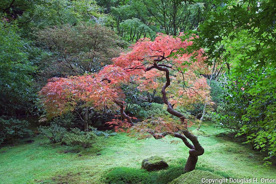 Tea Garden Glen Portland Oregon Japanese Garden