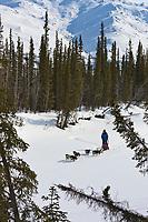 Recreational dog mushing along the Koyukuk river, Brooks range, arctic, Alaska.