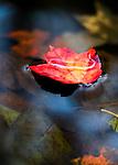 Leaves, Flowers & Butterflies