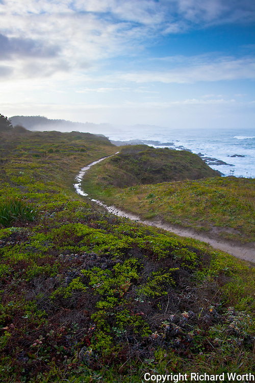 A path winds along the bluffs at Bean Hollow State Beach, still glistening from the previous night's rain.