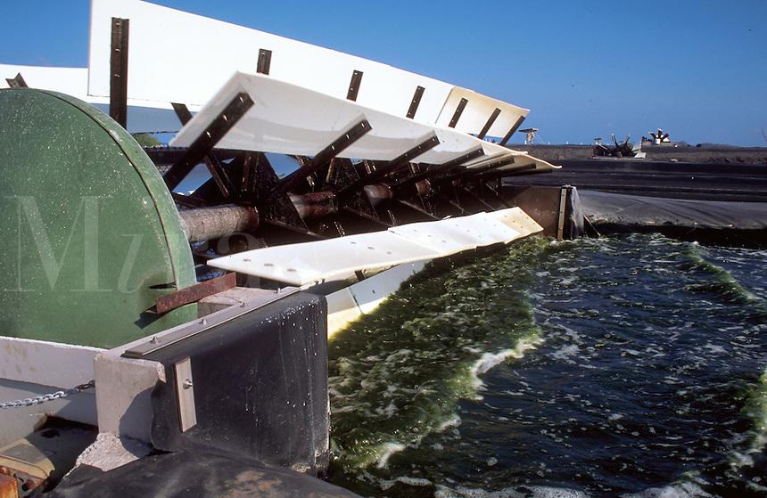 An artifical pond and paddlewheel cultivating Spirulina algae.