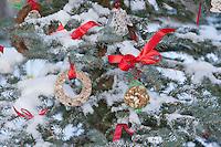 Tannenbaum, Weihnachtsbaum, Christbaum für Vögel, Tiere, Vogelfutter, Vogel-Futter, Futter, Weihnachtsbaum wird für Vögel im winterlichen Garten geschmückt mit Meisenknödeln, Erdnüssen, Hirsestangen, Fettfutter in Ausstechformen und anderen Leckereien, Dekoration, Garten-Deko, weihnachtlich
