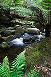 Forest stream in Mt Field National Park, Tasmania, AUSTRALIA