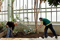 Tropical Rainforest Glasshouse (formerly Le Jardin d'Hiver or Winter Gardens), 1936, René Berger, Jardin des Plantes, Museum National d'Histoire Naturelle, Paris, France. Low angle view of gardeners raking the earth around new saplings in the Art Deco style Glasshouse.