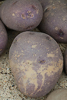 Mottled yellow and purple potato variety