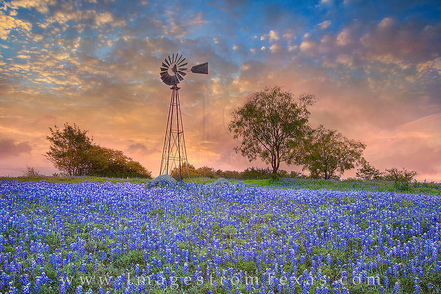 When I arrived at this site full of Texas bluebonnets, it was gray and overcast. I waited around for quite a while, and my patience was rewarded. The clouds began to break, and the sky lit up in an orange and blue canopy.