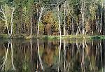 Woodland pond, Prioksko-Terrasny Nature Biosphere Reserve, Russia
