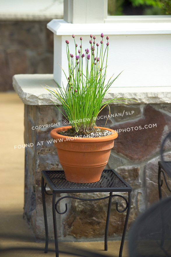 a terra cotta pot of purple-flowering chives sits on a patio end table in the dappled, late afternoon spring sunshine
