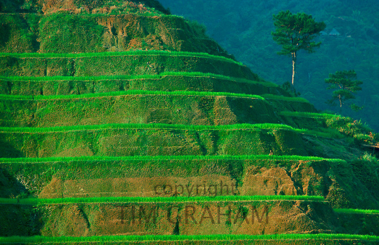 Rice Terraces at Banaue, Luzon Island, Philippines.  This terracing is more than 2000 years old.