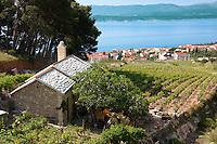 view of Bol  and its vineyards looking towards Hvar island , Bra? island, Croatia