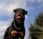 Rottweiller Shopping cart has 3 Tabs:<br />