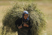 Farmer woman with hay-load. Lake Prespa National Park, Albania June 2009