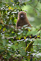 A young olive baboon peers out of the jungle. Harenna Forest