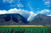 Sugar cane fields with the West Maui Mountains and a rainbow in the background at Launiupoko, Maui.