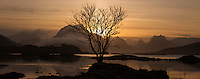 Lone winter tree silhouetted against mountain sunset, near Fredvang, Flakstadøy, Lofoten Islands, Norway