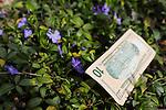 Comerica Bank Robbery