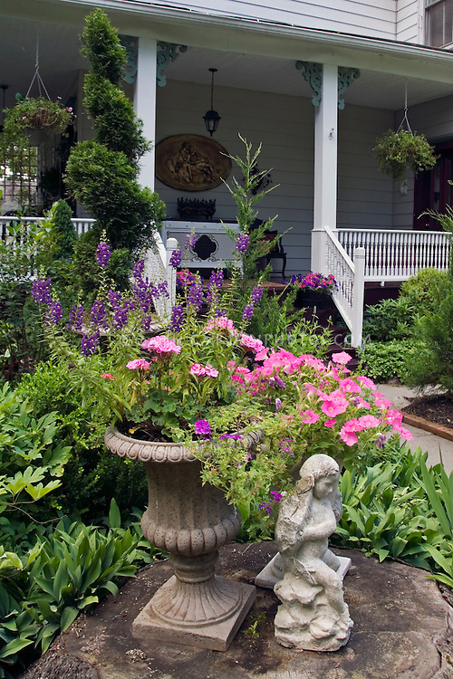 Angelonia, petunias & Pelargonium (annual geraniums) in concrete urn planter next to stone cherub in garden with house