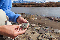 Fossil found along the Nigu river in the Gates of the Arctic National Park, Alaska.