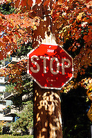 Stop sign surrounded by colorful autumn leaves, Vancouver, BC, Canada