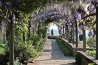 A wooden pergola supports a purple flowering wisteria over a stone path in the garden at La Foce