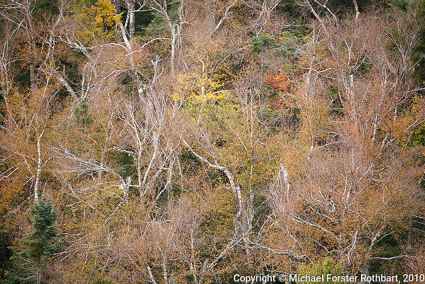 Birch trees have lost most of their leaves while maples retain their color during the peak of fall foliage atop 3254-foot Crane Mountain in Adirondack Park near Johnsburg, NY.<br /> <br /> &copy; Michael Forster Rothbart<br /> www.mfrphoto.com <br /> 607-267-4893 o 607-432-5984<br /> 5 Draper St, Oneonta, NY 13820<br /> 86 Three Mile Pond Rd, Vassalboro, ME 04989<br /> info@mfrphoto.com<br /> Photo by: Michael Forster Rothbart<br /> Date: 9/2010    File#:  Canon 5D digital camera frame 70706.<br /> ----------<br /> Original caption:<br /> The sun rises over 3254-foot Crane Mountain in Adirondack Park near Johnsburg, NY. The peak is offers distant views of Vermont's Green Mountains, Lake George, Blue, Speculator, Snowy mountains and the Adirondack High Peaks, as well as nearby Garnet Lake and Little Pond. Birch and maple trees, moss and lichen near the peak turn colorful during the peak of fall foliage.