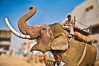 Mahout and his decorated elephant in Agra. (Photo by Matt Considine - Images of Asia Collection)