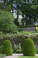 Two topiary yew bushes in front of a wall covered with rambling roses in the Upper Garden at Haddon Hall