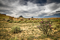 A lone cholla blooms in the ghost town of Guadalupe, New Mexico in a remote section of the Rio Puerco Valley