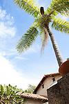 A single palm tree in the gardens of Old Mission Santa Barbara, Santa Barbara, California, USA