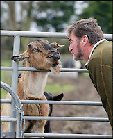 BNPS.co.uk (01202 558833)<br /> Pic: DavidFitzgerald/BNPS<br /> <br /> Kenny with Susie the Irish Goat who has been in every series of Game of Thrones so far.<br /> <br /> Supplying farm animals to TV and film crews, including the huge hit series Game of Thrones, has saved Kenny Gracey's bacon.<br /> <br /> The 57-year-old farmer started supplying pigs, cows, donkeys, goats and even a trained deer to Hollywood seven years ago, when the recession was hitting his business hard.<br /> <br /> Mr Gracey said the film work his animals get has helped him pay the bills and keep his business going.<br /> <br /> Forthill Farm in Tandragee, Northern Ireland, specialises in traditional breeds like Longhorn cattle and Gloucestershire old spot pigs, ideal for shows and films set in medieval times.