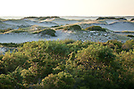 Wooly beach heather and Northern bayberry stabilize the dunes at Sandy Neck Conservation Area in Barnstable, Cape Cod, MA, USA