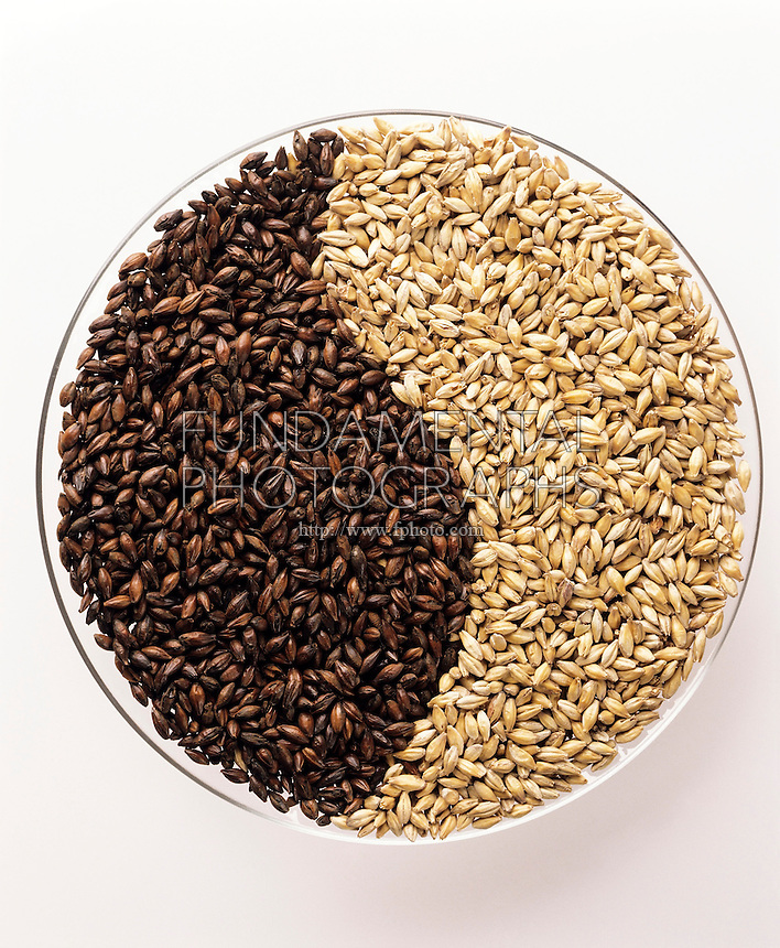 MALTS: LIGHT AND DARK<br />