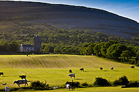 Homestead in shadow of The Burren karst landscape and Newtown Castle, Ballyvaughan, County Clare, West of Ireland