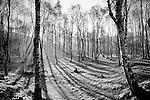 Sunlight shining through trees in winter in England