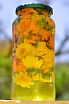 Marigolds marinating in oils in glass jar