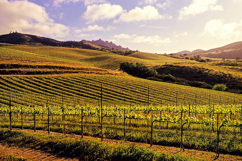 Chalone Vineyards near the Pinnacles, Monterey County, California USA