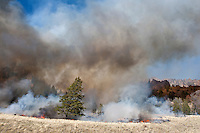 Controlled fire in the Shoshone National Forest