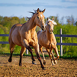 20150509 Horses at Liberty