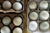 Locavore | Spring Onions, Eggs