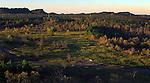 A free range horse roamed the land around around Elk Ridge on Oct. 15th. .Photo by Sam Verbulecz